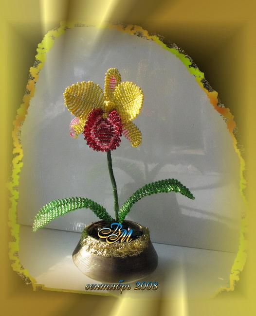 """Орхидея """" Каттлея alma kee"""" из"""