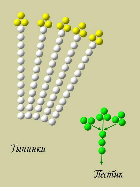 Мастер-класс 326 Жасмин из бисера ( рис 1) Автор - Вероника Моисеева.  Дарья Нечаева.